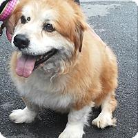 Adopt A Pet :: Fatone - Winchester, VA