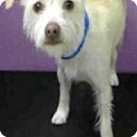 Adopt A Pet :: Melody-ADOPTION PENDING - Boulder, CO