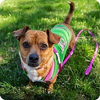 Adopt A Pet :: Zoe - Arlington, VA
