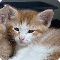 Adopt A Pet :: Joey - Massapequa, NY
