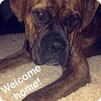 Adopt A Pet :: Mudd - Wilmington, NC