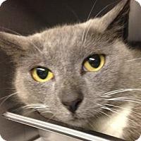 Adopt A Pet :: Dorothy - PetSmart - Voorhees, NJ
