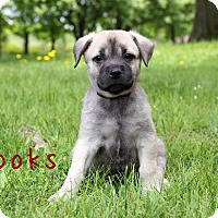 Adopt A Pet :: Brooks - New Oxford, PA