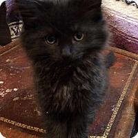 Adopt A Pet :: Lydia - Los Angeles, CA