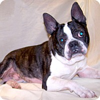Adopt A Pet :: Petey - Jackson, TN