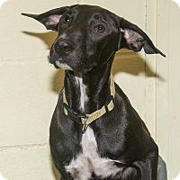 Adopt A Pet :: Luli - Elmwood Park, NJ