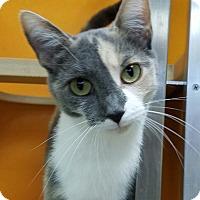 Adopt A Pet :: Meow Meow - Elyria, OH