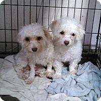 Adopt A Pet :: Captain - Daleville, AL