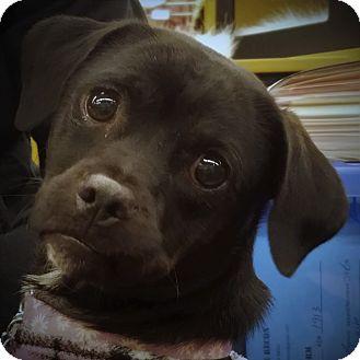 Terrier (Unknown Type, Medium)/Dachshund Mix Dog for adoption in Oakley, California - Perdita