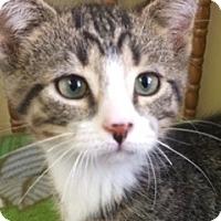 Adopt A Pet :: Hawk - White Cloud, MI
