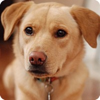 Adopt A Pet :: Willow - Courtesy Listing - Holly Springs, NC