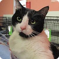Adopt A Pet :: Robin Hood - Reeds Spring, MO