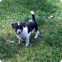Adopt A Pet :: Cagney - Winder, GA