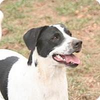 Adopt A Pet :: Beau - Hayden, AL