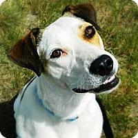 Adopt A Pet :: Juno - Cheyenne, WY