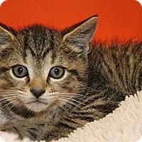 Adopt A Pet :: CARSON - SILVER SPRING, MD