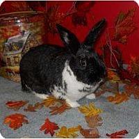 Adopt A Pet :: Ariel - Roseville, CA