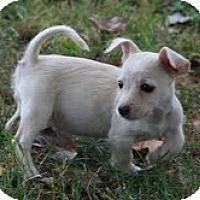 Adopt A Pet :: Lola - Brattleboro, VT
