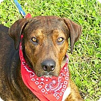 Adopt A Pet :: JAKE - Brooksville, FL