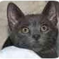 Adopt A Pet :: Rufus - Delmont, PA
