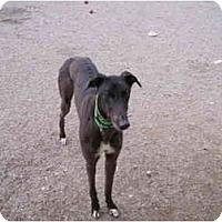 Adopt A Pet :: Mr. Poge (Mister Poge) - Chagrin Falls, OH