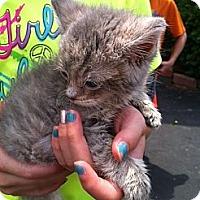 Adopt A Pet :: Zachery - Jeffersonville, IN