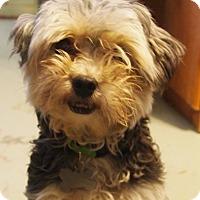 Adopt A Pet :: Usher - Prole, IA