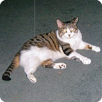 Adopt A Pet :: Hula - Quail Valley, CA