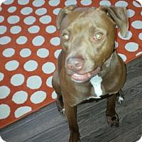 Adopt A Pet :: Tyson - Lancaster, PA