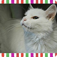 Adopt A Pet :: Ayla - bridgeport, CT