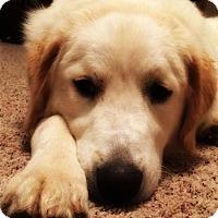 Adopt A Pet :: Bella - Kyle, TX