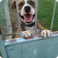 Adopt A Pet :: Bruno - Glenpool, OK