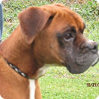 Adopt A Pet :: Max - Germantown, MD