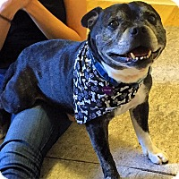 Adopt A Pet :: Walter Matthau the Dog - Los Angeles, CA