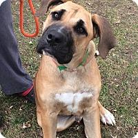 Adopt A Pet :: BOLO - Oswego, IL