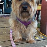 Adopt A Pet :: Marty - Bellbrook, OH