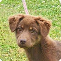 Adopt A Pet :: **PRESLEY** MEET JUNE 11TH! - Mukwonago, WI