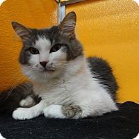 Adopt A Pet :: Kitton - Elyria, OH