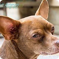 Adopt A Pet :: Whitty - San Francisco, CA