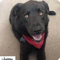 Adopt A Pet :: Jax - Great dog! - Huntsville, ON