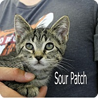 Adopt A Pet :: Sour Patch - Wichita Falls, TX