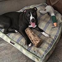 Adopt A Pet :: HARLEE MIZZEN - Anaheim Hills, CA