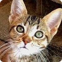 Adopt A Pet :: Kona - LaJolla, CA