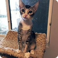 Adopt A Pet :: Louise - Mission Viejo, CA