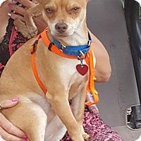 Adopt A Pet :: Bugsey - Bartonsville, PA