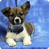 Adopt A Pet :: FRANCESCA - Westminster, CO