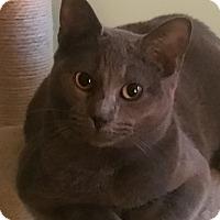 Adopt A Pet :: Lia - Germantown, MD