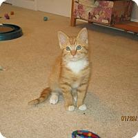 Adopt A Pet :: Leo - Sugar Land, TX