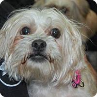 Adopt A Pet :: Laura - Brooklyn, NY