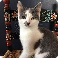 Adopt A Pet :: Dash - Portland, ME